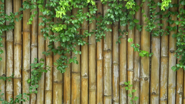 bamboo fence background. - recinzione video stock e b–roll