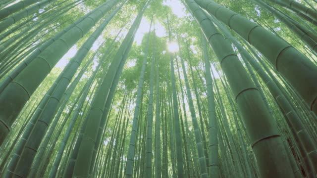 竹林-4 k - 潅木点の映像素材/bロール