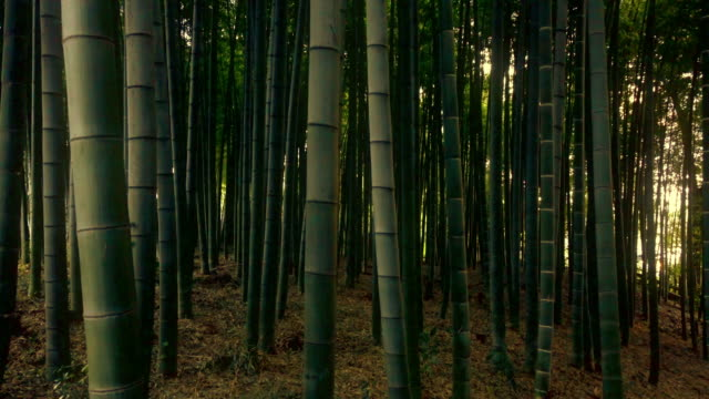Bamboo forest -4K-