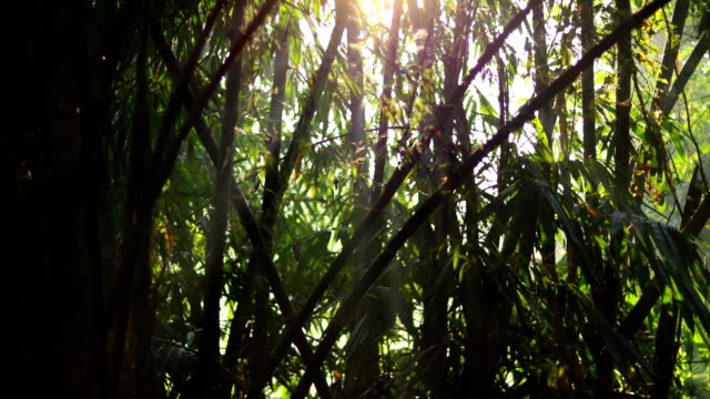 竹森と太陽光の背景の時間の経過 - bamboo plant点の映像素材/bロール