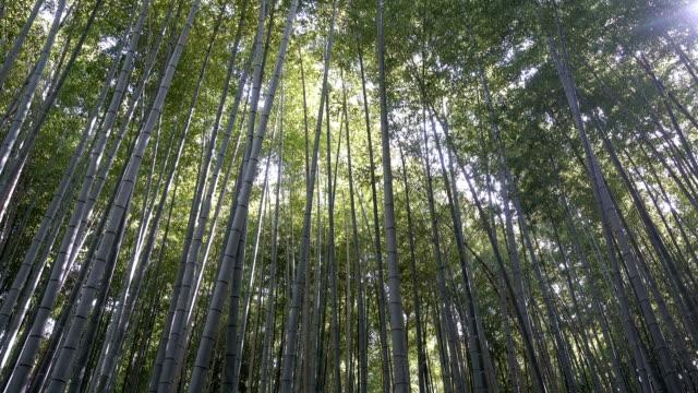 竹林、嵐山、京都、日本 4k - bamboo plant点の映像素材/bロール