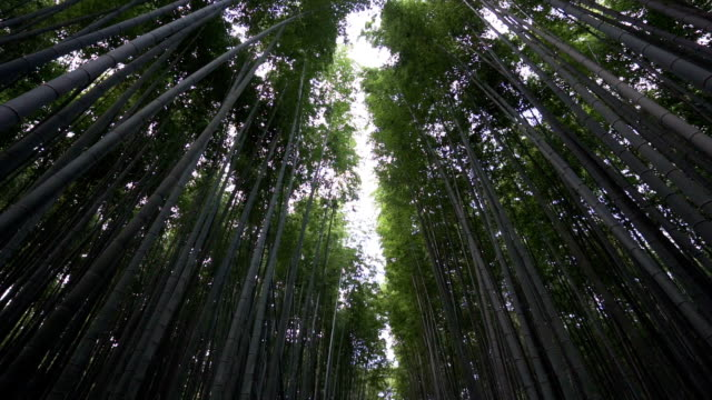 uhd, bamboo forest at arashiyama kyoto japan - grove stock videos & royalty-free footage