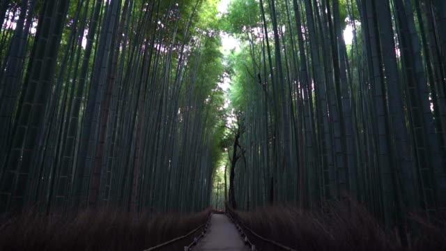 Im Arashiyama Bambuswald