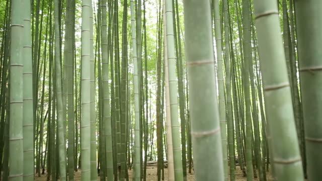 竹林フォーカスプル - 竹点の映像素材/bロール