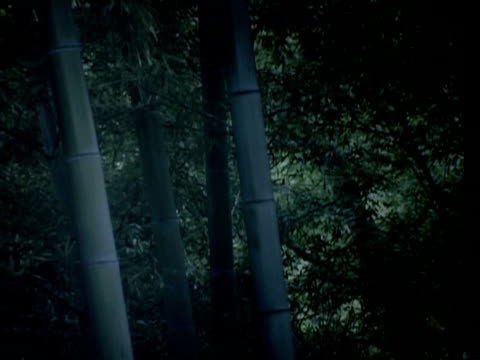 竹林の夜 - bamboo plant点の映像素材/bロール