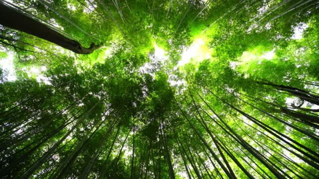京都の竹林 - 竹点の映像素材/bロール