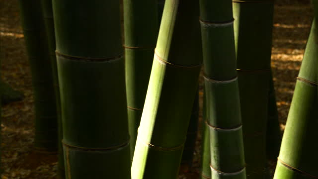 bamboo forest. light and shade - shade stock videos & royalty-free footage