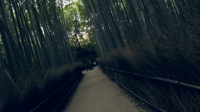 bamboo forest of kyoto - bamboo shoot stock videos & royalty-free footage