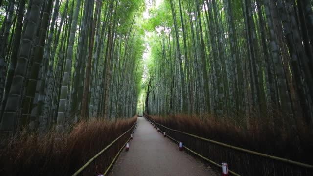 bamboo forest, sagano, ukyo ward, arashiyama, kyoto, kansai region, honshu, japan, asia - kyoto prefecture stock videos & royalty-free footage