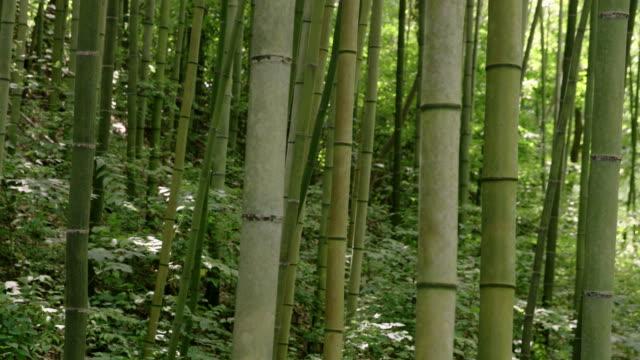 bamboo forest / suncheon-si, jeollanam-do, south korea - 竹点の映像素材/bロール