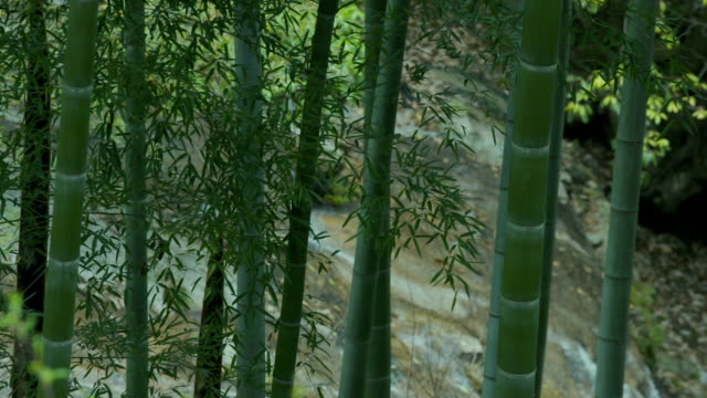 bamboo forest - focus on foreground stock videos & royalty-free footage