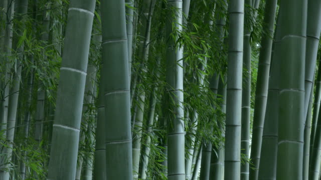 bamboo forest - tree trunk stock videos & royalty-free footage