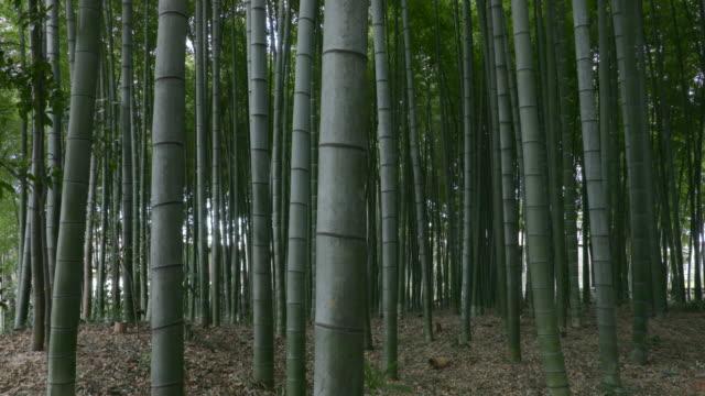 bamboo forest - bamboo plant点の映像素材/bロール