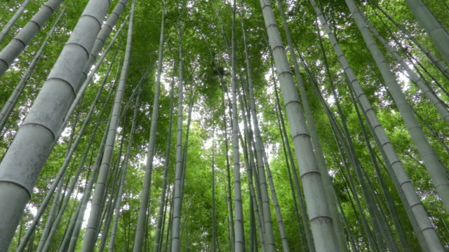 bamboo forest - 竹点の映像素材/bロール