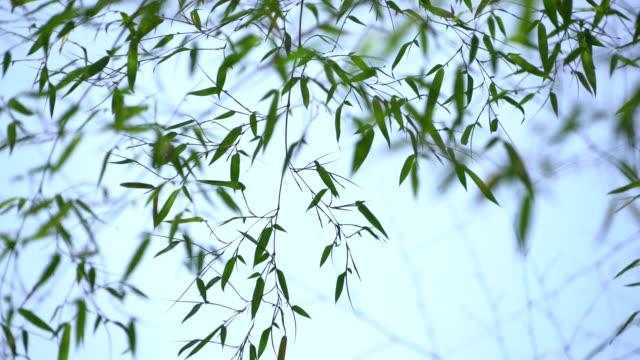 vídeos de stock e filmes b-roll de bamboo forest - bambu material