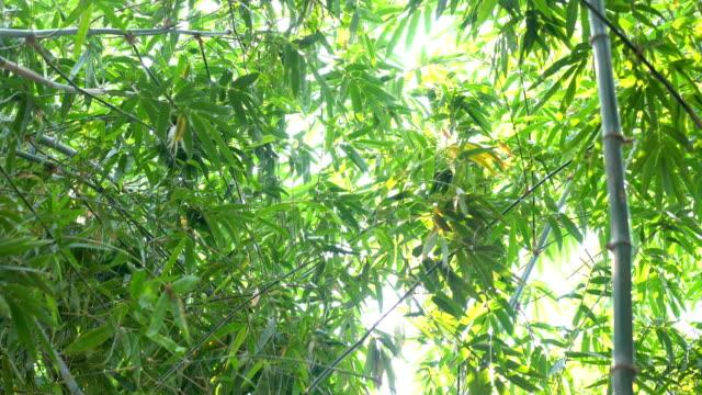 vídeos de stock, filmes e b-roll de floresta de bambu com luz solar em fores tropicais da chuva - processo vegetal