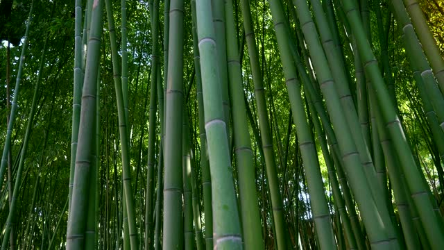 bamboo forest,natural background - bamboo plant stock videos & royalty-free footage