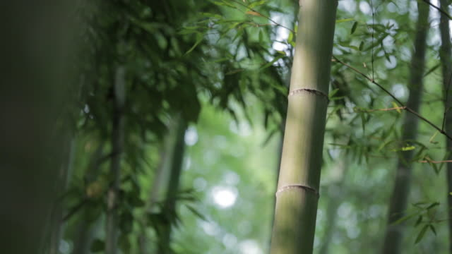 bamboo grove in jungnogwon bamboo garden / damyang-gun, jeollanam-do, south korea - damyang stock videos & royalty-free footage