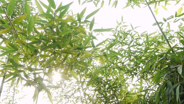 竹のくつろぎ - 音声あり点の映像素材/bロール