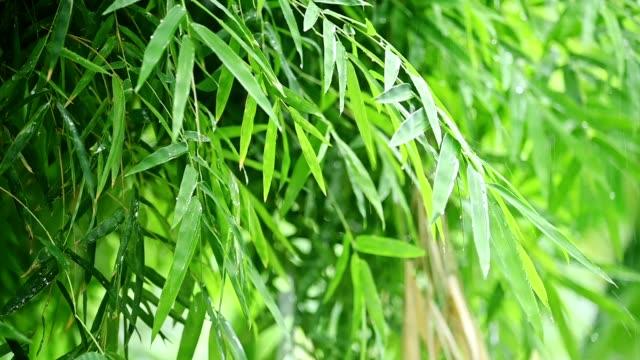 vídeos de stock e filmes b-roll de bamboo leaves with raining - bambu material
