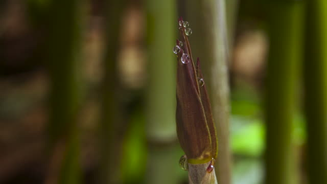 tl bamboo shoots emerge from forest floor, uk - bamboo shoot stock videos & royalty-free footage