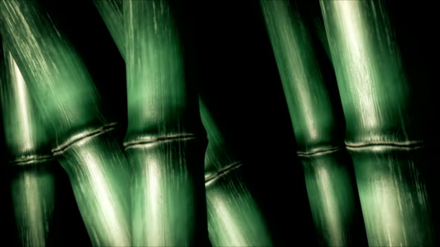 stockvideo's en b-roll-footage met bamboo thickets - bamboo plant