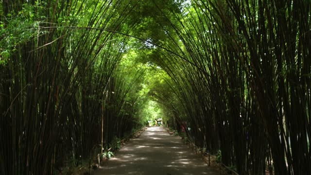 bamboo tree in tropical forest. - tropical tree stock videos & royalty-free footage