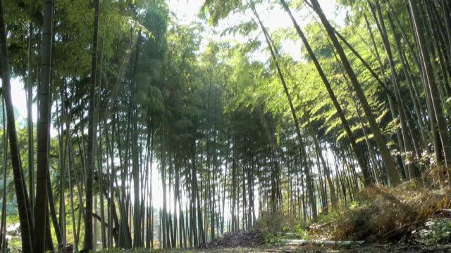 bamboo trees swinging with wind in kamakura, japan - 神奈川県点の映像素材/bロール