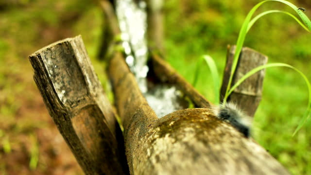 vídeos de stock e filmes b-roll de funcionalidade de água de bambu - rebento de bambu