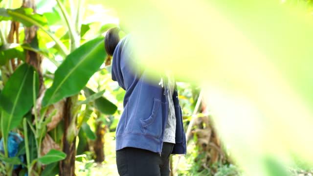 vídeos de stock e filmes b-roll de banana farm - ramo parte de uma planta