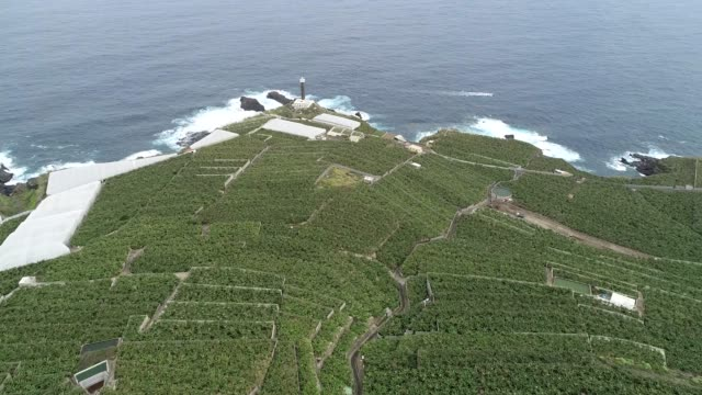 stockvideo's en b-roll-footage met banana plantations and faro de punta lighthouse, unesco biosphere site, la palma, canary islands, spain, atlantic, europe - 19e eeuwse stijl