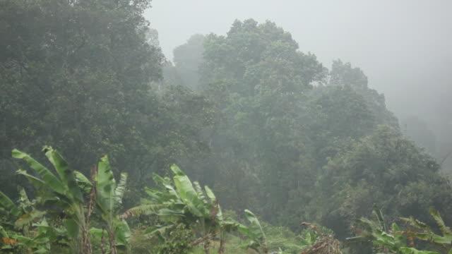 vídeos y material grabado en eventos de stock de banana plants sway in strong wind. - java
