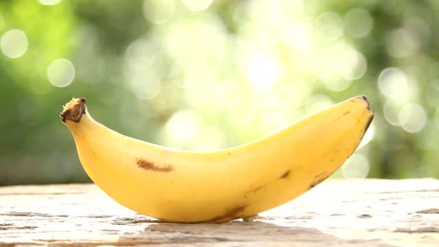 vídeos de stock, filmes e b-roll de banana - pomar