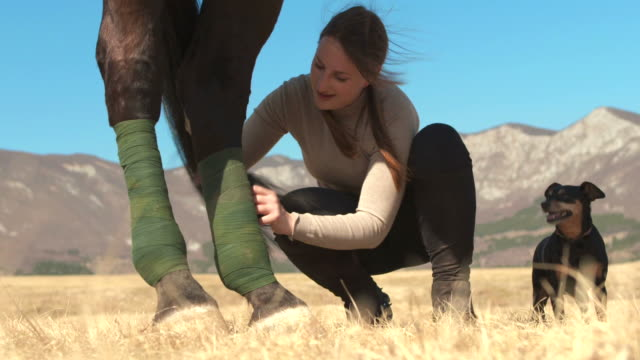 hd: bandaging a horse's leg - bandage stock videos & royalty-free footage
