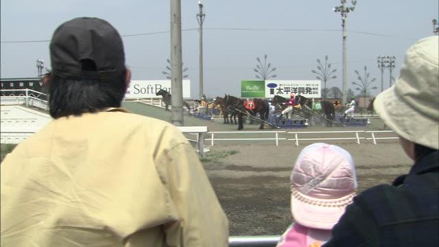 vídeos de stock e filmes b-roll de ban-ei horse-drawn sled racing / obihiro racecourse - grupo médio de animais