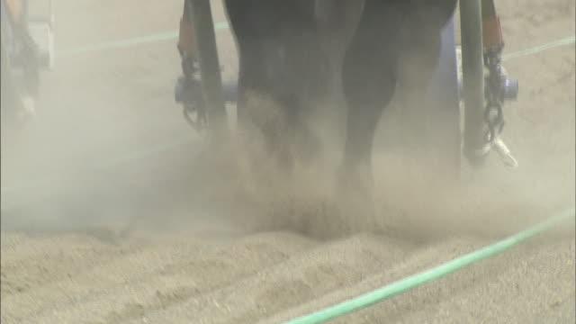vídeos de stock, filmes e b-roll de ban-ei horse-drawn sled racing / obihiro racecourse - animal de trabalho