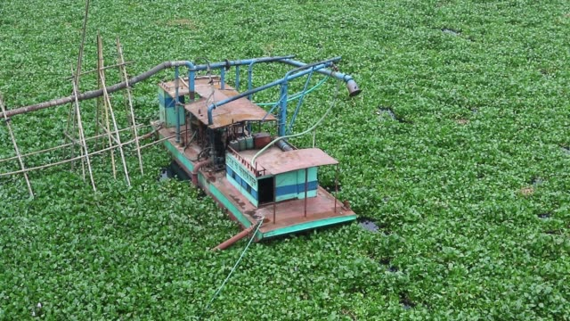 bangladeshi boat man struggles to make his way through a water hyacinth filled buriganga river in dhaka. the free floating aquatic plant is hampering... - hyacinth stock videos & royalty-free footage