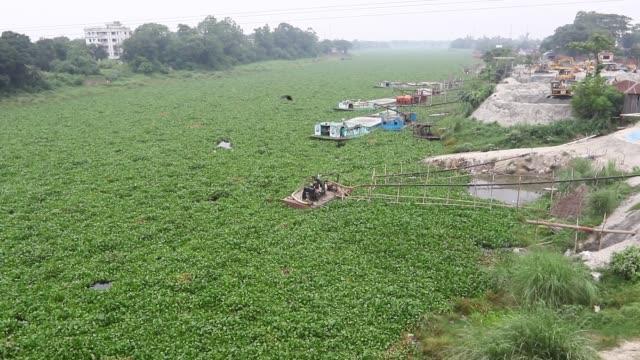 bangladeshi boat man struggles to make his way through a water hyacinth filled buriganga river in dhaka the free floating aquatic plant is hampering... - hyacinth stock videos & royalty-free footage