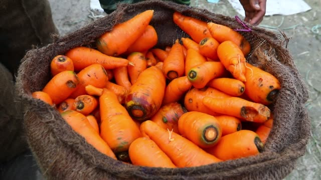 Bangladeshi farmers put fresh carrot in bags after cleaning carrots