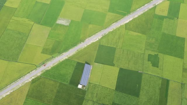 vidéos et rushes de bangladeshi farmers watering in the crop field using solar energy - culture agricole