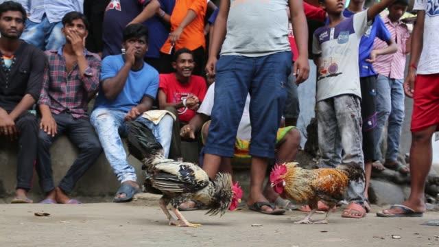 Bangladeshi people arrange cock fighting on the streets in Dhaka Bangladesh on July 13 2018