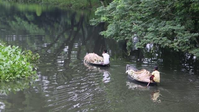 vídeos y material grabado en eventos de stock de bangladeshi people process water lily to sell them in market near in dhaka , bangladesh on july 27, 2018. almost three-quarters of the population... - organismo acuático