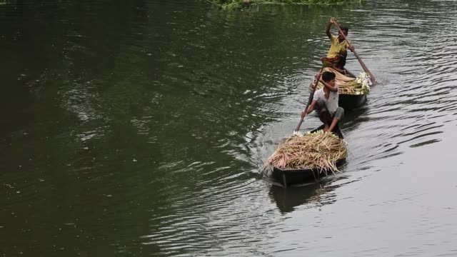 bangladeshi people process water lily to sell them in market near in dhaka bangladesh on july 27 2018 almost threequarters of the population live in... - aquatisches lebewesen stock-videos und b-roll-filmmaterial