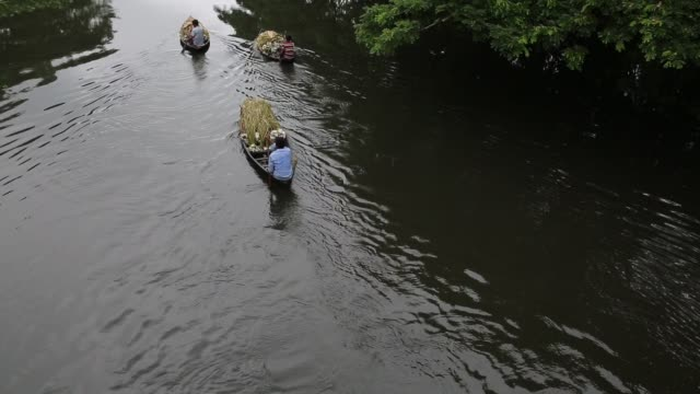 vídeos de stock, filmes e b-roll de bangladeshi people process water lily to sell them in market near in dhaka bangladesh on july 27 2018 almost threequarters of the population live in... - planta d'água