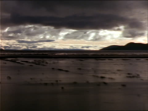 a bank of silver and gray clouds looms above lake titicaca. - wasserpflanze stock-videos und b-roll-filmmaterial