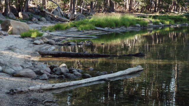 banks of the merced river, yosemite national park - merced river stock videos & royalty-free footage