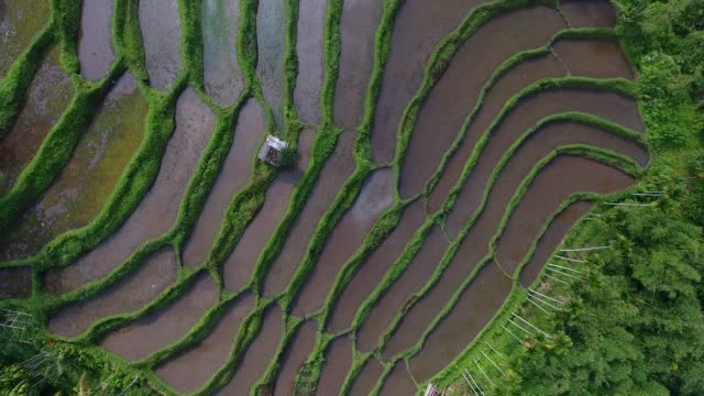 banyuwangi rice rerraces in east java, indonesia - rice paddy stock videos and b-roll footage