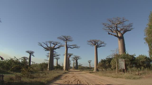 baobab tree and blue clear sky in madagascar - マダガスカル点の映像素材/bロール
