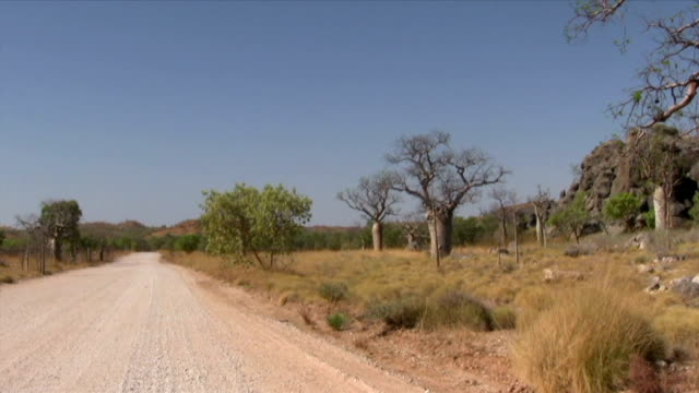 hd: baobab trees by the gibb river road - arid stock videos & royalty-free footage