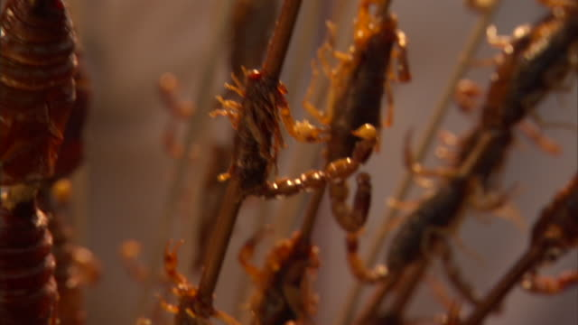 slo mo ecu tu barbecued bugs and scorpions on sticks, beijing, china - chinese culture stock videos & royalty-free footage
